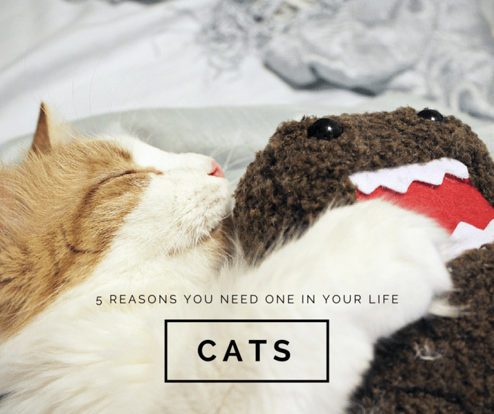 5 reasons you need a cat in your life // Geeky Posh