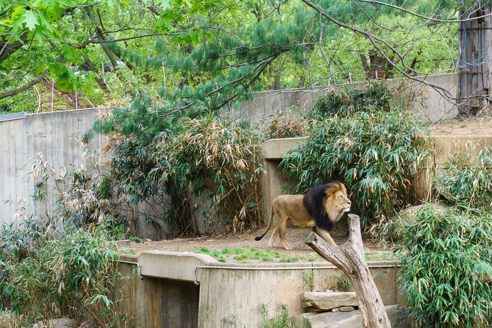 Smithsonian National Zoo in DC // Geeky Posh
