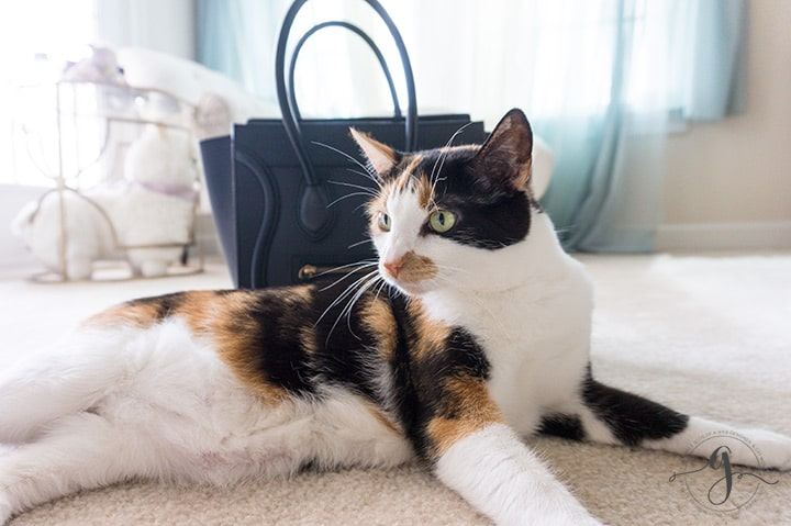 7 Instagram tips I learned from my cat // Geeky Posh
