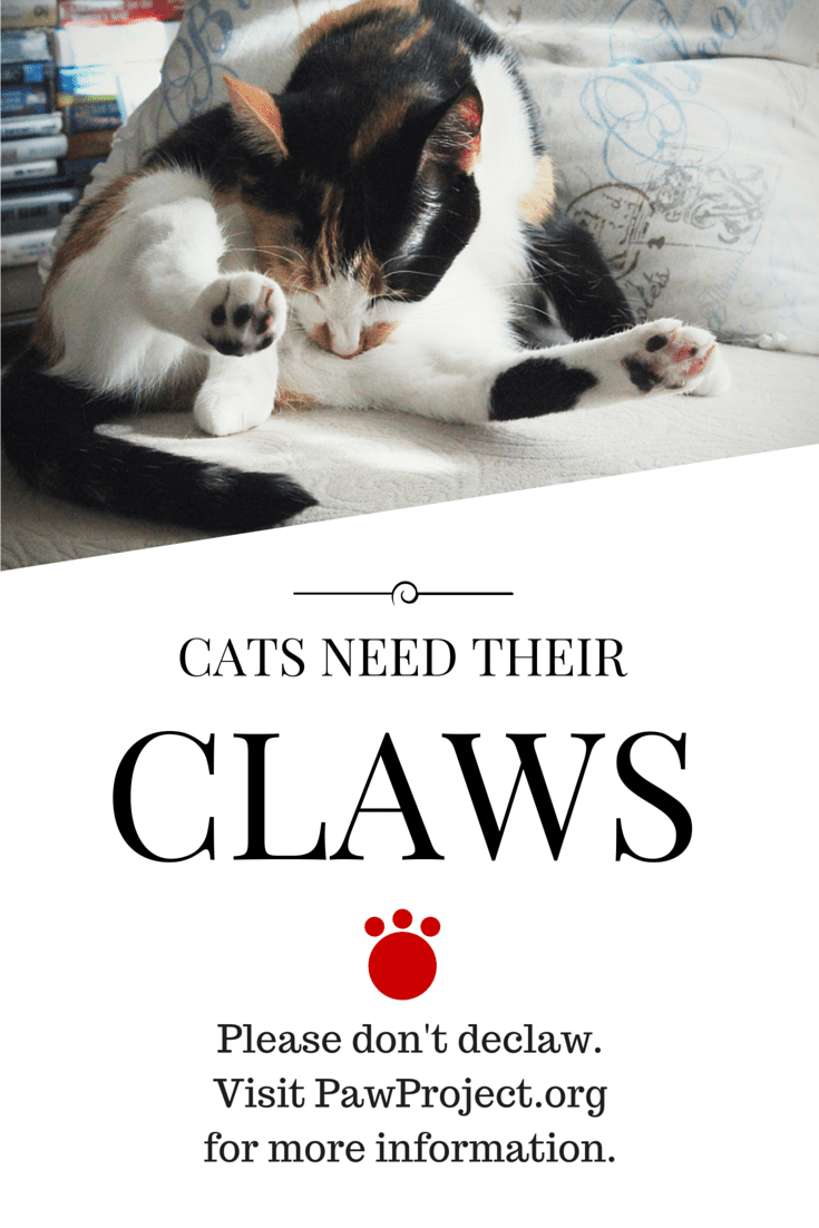 Love your cats, don't declaw // Geeky Posh