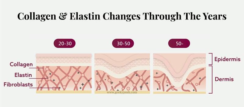 collagen-elastin-changes-in-skin